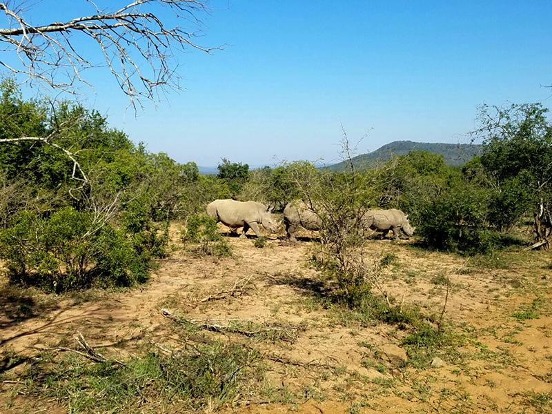 Rhino at Hluhluwe National Reserve